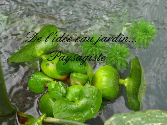 Plantes flottantes