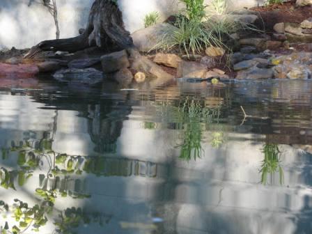 Bassin ambiance nature