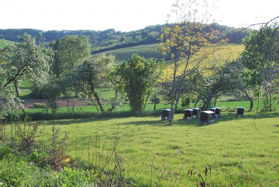 Rucher conservatoire de Migé dans l'Yonne