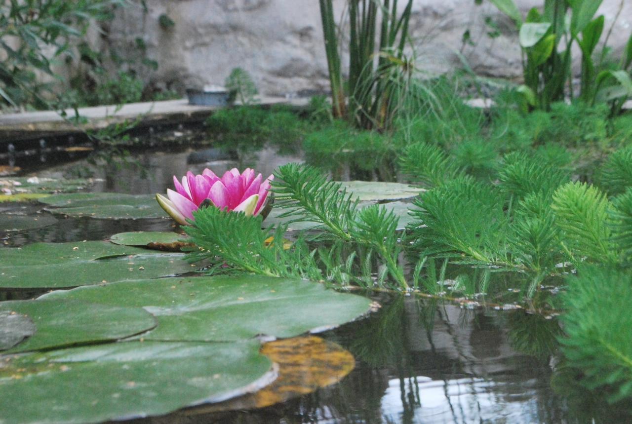 Paysagiste auxerre cr ation de jardin bassin terrasse for Entretien jardin auxerre