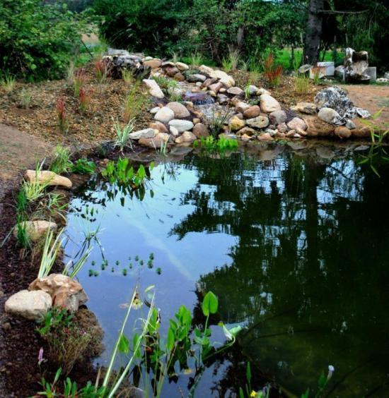 Bassin végétalisé