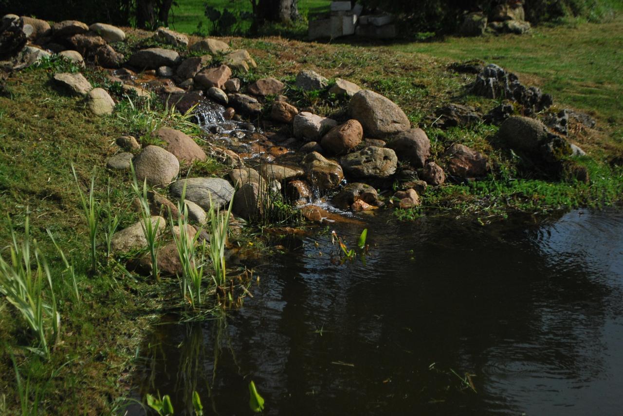 Bassin paysagé