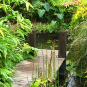 Ponton bois pour bassin à Auxerre